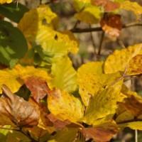 Herbstfarben1