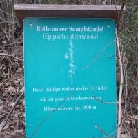 RotbraunerSumpfstaendel_copyrightgurschler
