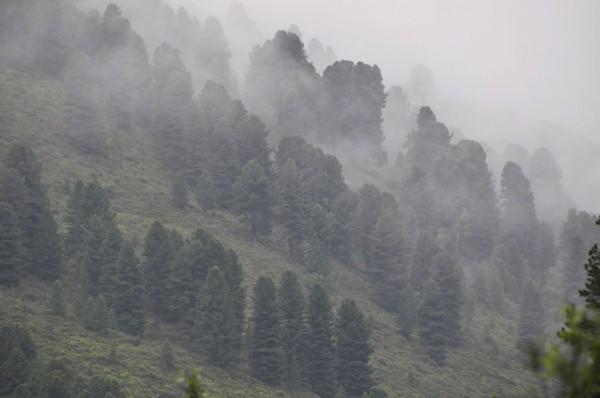 Nebelschwaden im Gebirge (© Gurschler)