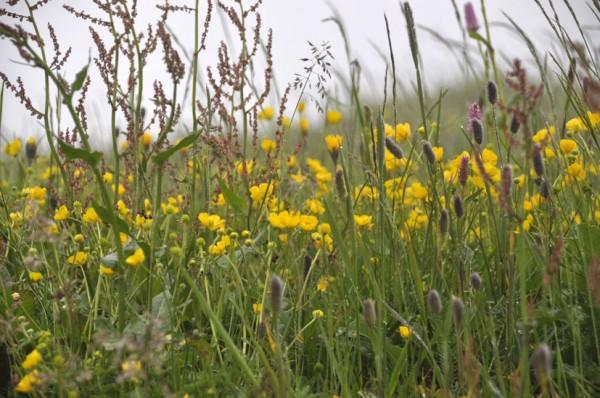 Blumenwiese  (© Gurschler)