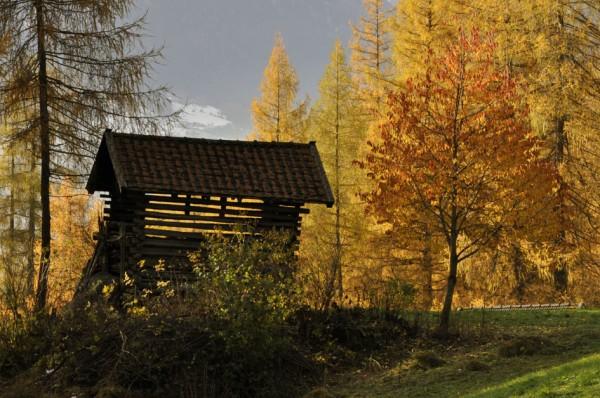 Herbstfarben_1_©susannegurschler