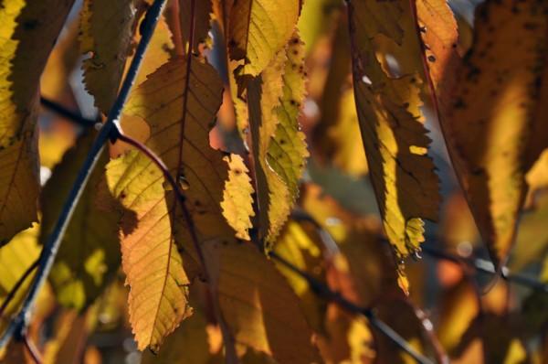 Herbstfarben_4_©susannegurschler
