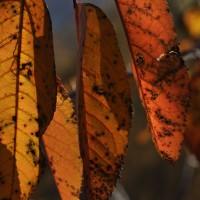 Herbstfarben_3_©susannegurschler