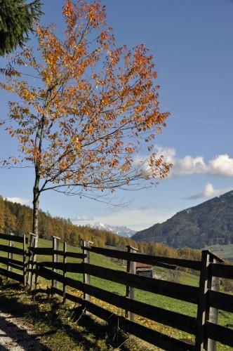 Herbstfarben_2_©susannegurschler