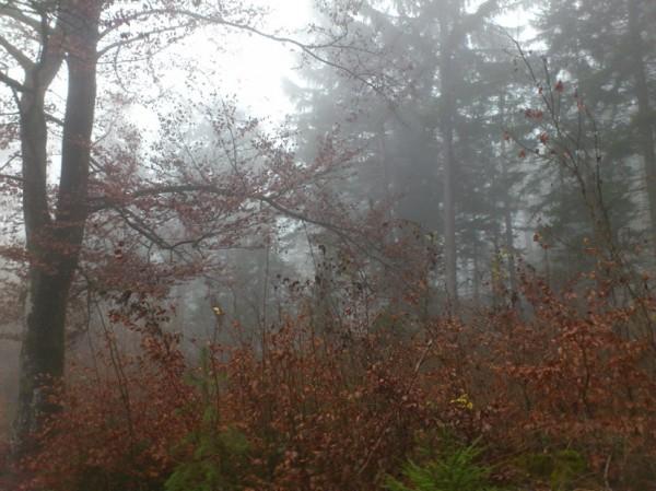 Bäume und Sträucher im Nebel; Foto: ©susannegurschler