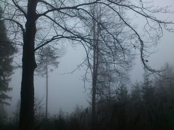 Bäume im Nebel; Foto: ©susannegurschler