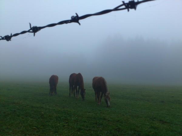 Pferde im Nebel; Foto: ©susannegurschler