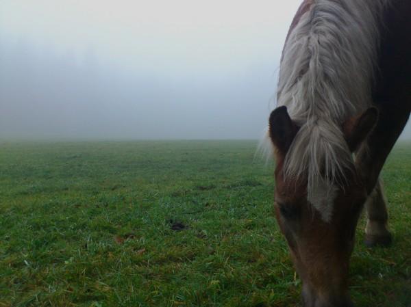Pferd im Nebel; Foto: ©susannegurschler