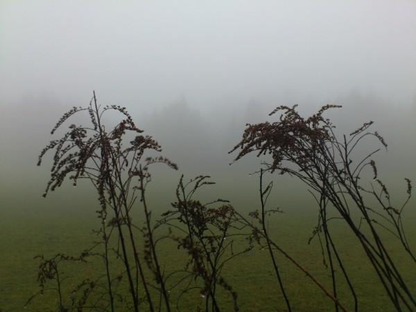 Blumen im Nebel; Foto: ©susannegurschler