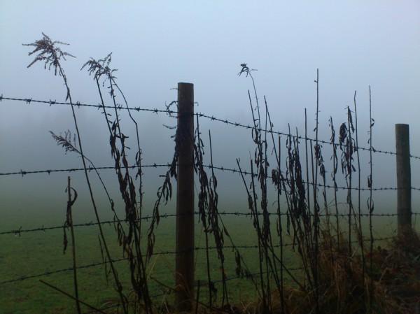 Zaun im Nebel; Foto: ©susannegurschler